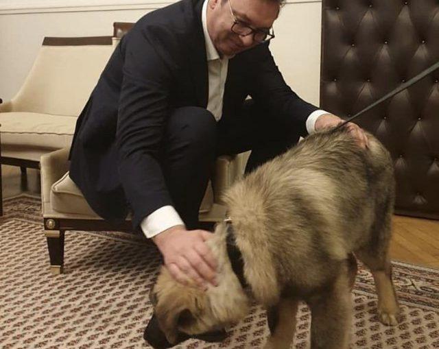 Вучичу подарили собаку